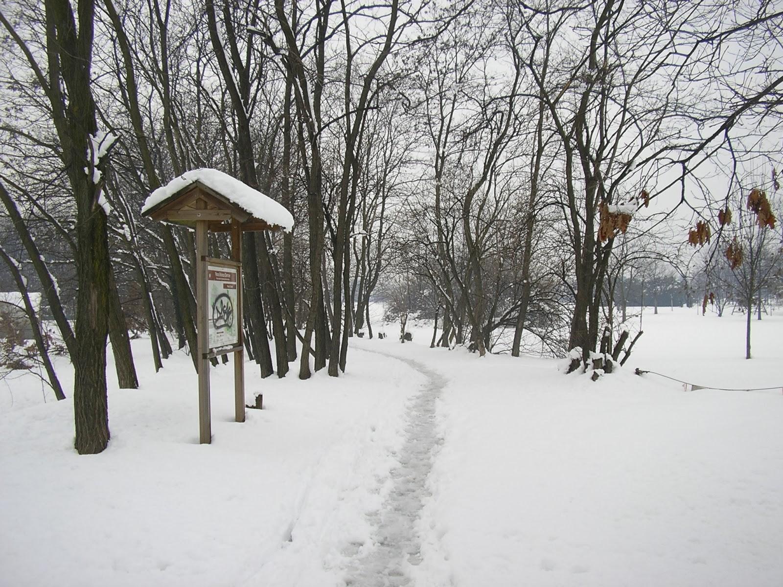 parco delle groane con neve